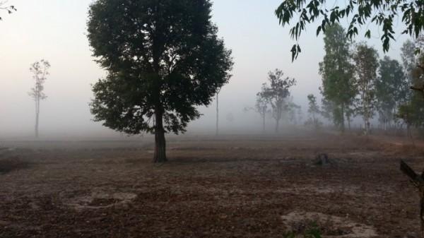 タイの朝霜