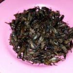 タイの珍味 コオロギ? ジンリー タイの食べ物
