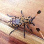 タイで変わった虫発見 タイの動物・生き物