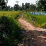 タイの田舎は毎日がキャンプ タイの生活・風習