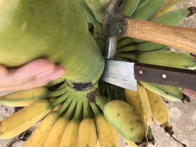 バナナの切り方