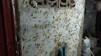 メンマーオの襲撃 タイの動物・生き物