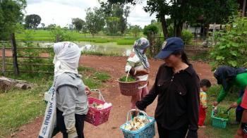タイの田舎でキノコ狩り タイの生活・風習